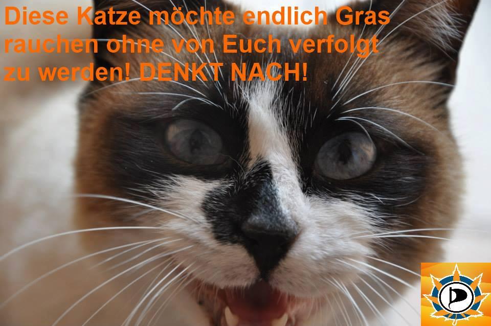 Katzen würden Gras kaufen ;)